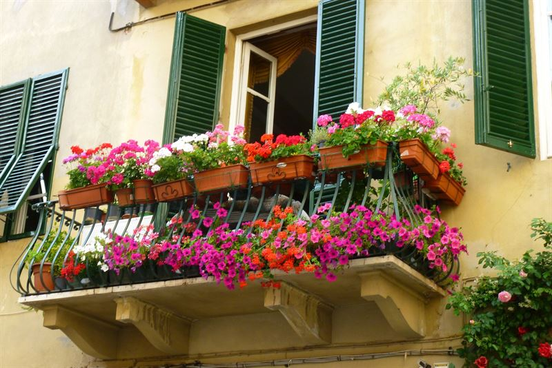 Classic Lucca Window Boxes